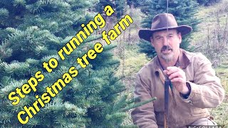 Running a Christmas Tree Farm: A brief overview