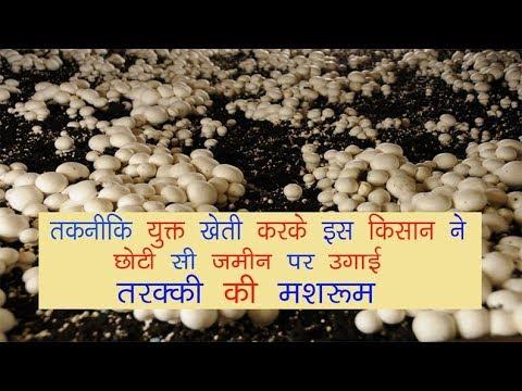 तकनीकी युक्त खेती करके इस किसान उगाया मशरूम.... // Mushroom Farming // Krishi Jagran