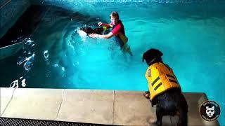 Dog Pool : piscine en famille !