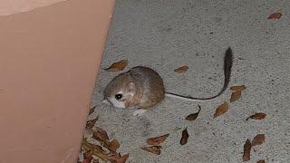 A Round Fluffy Little Critter...
