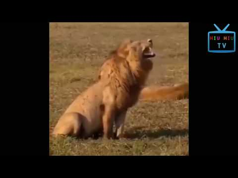 Funny Animal Mating - Super Funny Animal Compilation 2017 Part 3