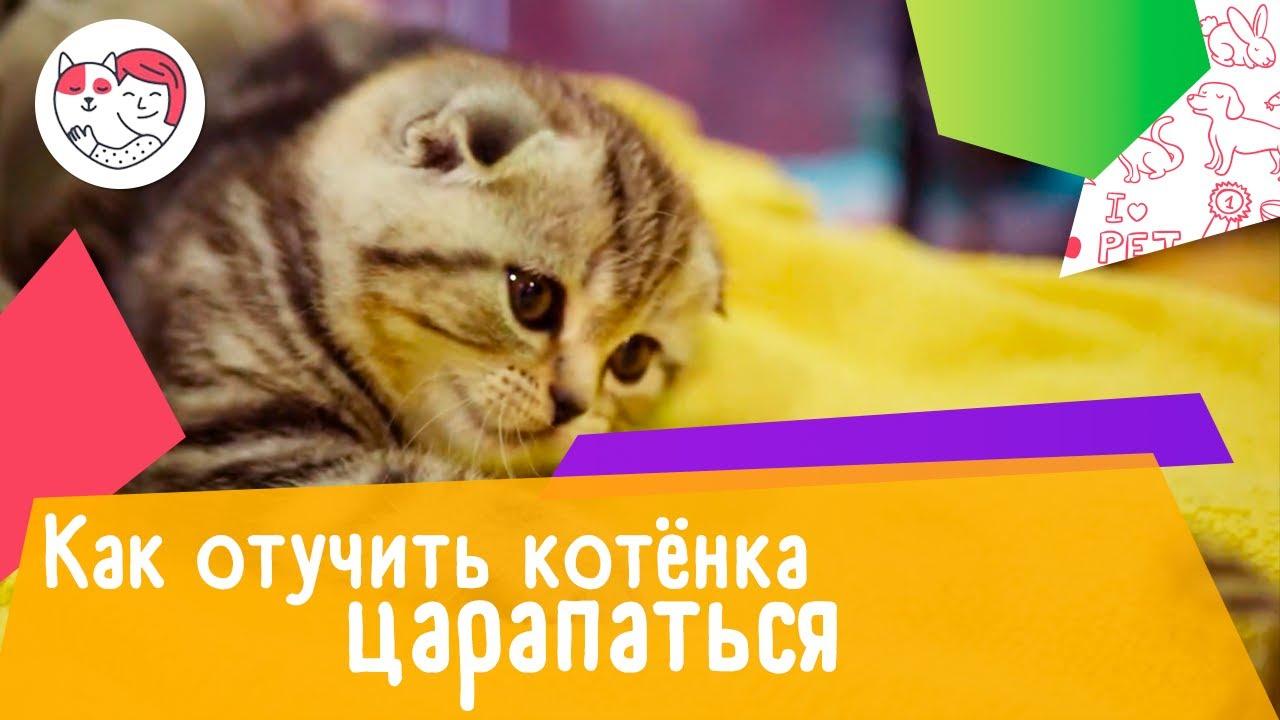 4 совета, как отучить котёнка царапаться