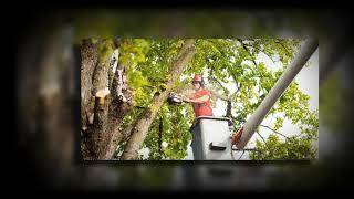 Tree Removal Dublin - https://goodfellers.ie/tree-felling/