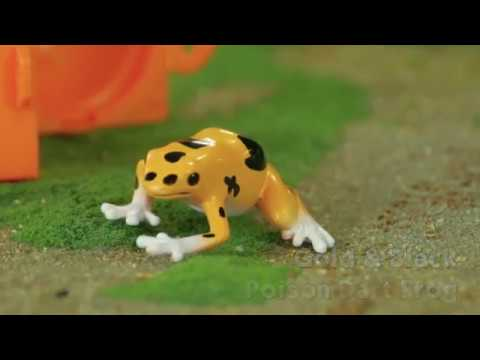 Poison Dart Frogs Toob® from Safari Ltd®