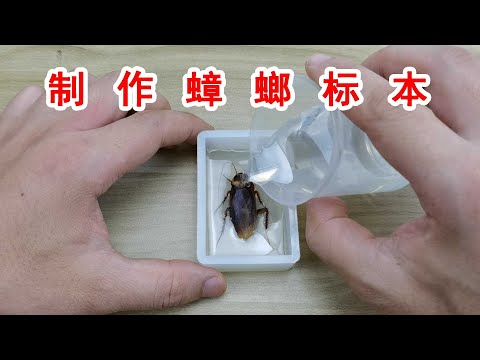 製作一個水晶蟑螂標本