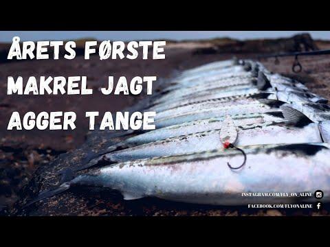 Makrelfiskeri på Agger Tange