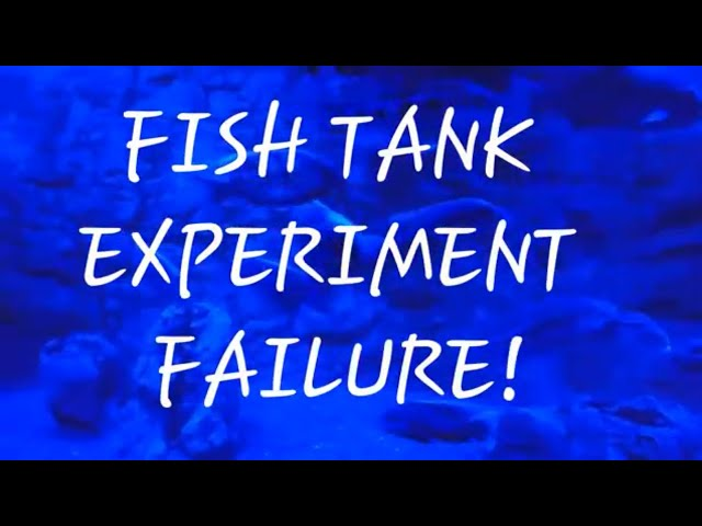 Fish Tank EXPERIMENT FAILURE!