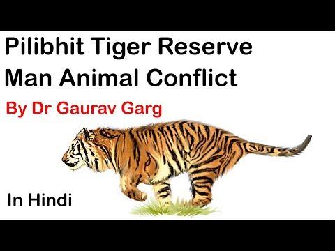 Man-Tiger conflict inside Pilibhit Tiger Reserve in Uttar Pradesh - Environment & Ecology #UPSC #IAS