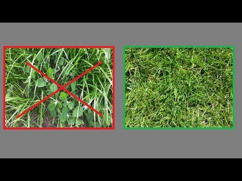 Kein Unkraut Mehr Im Rasen   Unkraut Im Rasen Entfernen Ohne Dem Rasen Zu  Schaden