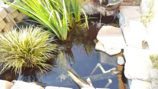 Turtle Pond Update