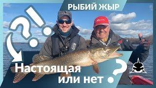 Отчет о рыбалке с чебоксарского водохранилища