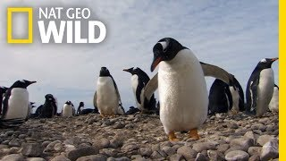 Symphony For Our World - Full Episode | Nat Geo WILD