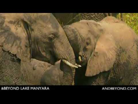 Lake Manyara Tree Lodge - Tanzania - With Rainforest Introduction
