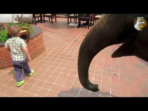, title : 'Приколы с животными - любимцы детей | new crazy animals 46'