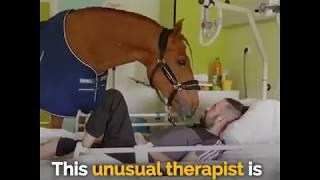 テラピー犬じゃなく、馬?!