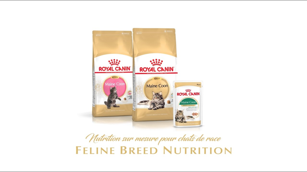 Maine Coon Feline Breed Nutrition par Royal Canin - 2