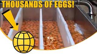 Egg Breaking And Separation; SANOVO OptiBreaker Compact 2_super Whole Egg