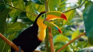 Best Relaxing Jungle Sounds Tropical Amazon Rainforest With Distant Thunder  3 Hours Long ! Chillout