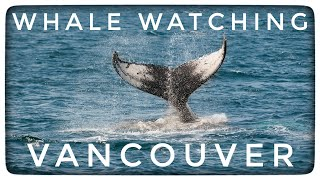 Prince of Whales, Whale Watching Tour in Vancouver B.C.