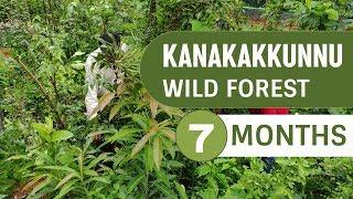 Miyawaki Model Forest at Kanakakkunnu After Seven Months