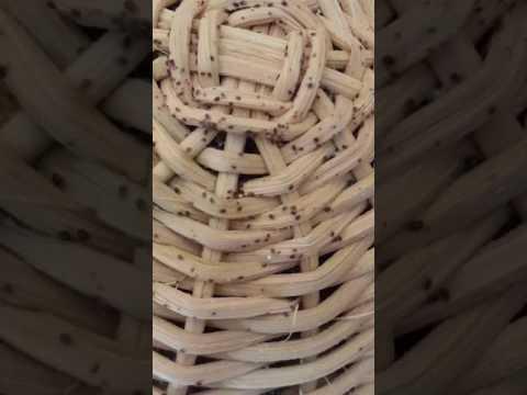 Vermi e brodo di una camomilla