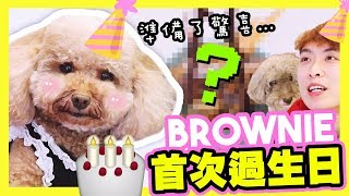 【🐶BROWNIE第一次過生日啦】為牠準備了生日驚喜😍!?當BROWNIE遇上小brownie...(中字)成長記外篇❤️