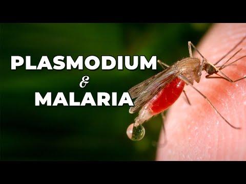 Mérgező parazita elleni védekezés