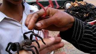 preview picture of video 'TWO BIG SPIDERS - Tarantulas on my hand'