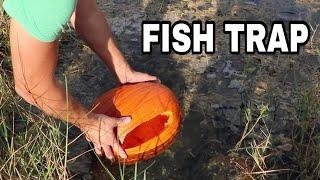 PUMPKIN FISH TRAP Catches JAWS DINNER