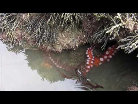 See and touch an octopus - Bucket List Ideas