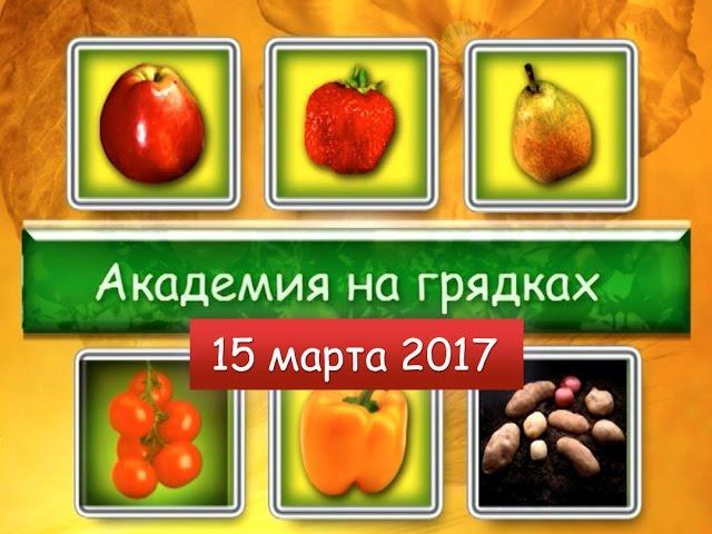 Академия на грядках от 15 марта 2017