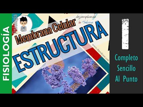 Membrana Celular 1 ESTRUCTURA