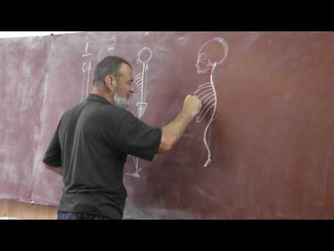 Определение углов сколиоза