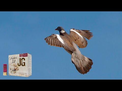 Caza de palomas torcaces con cartuchos JG