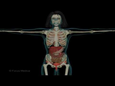 Was können die Gelenke in ihren Armen heilen