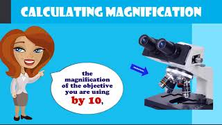calculating magnification on a compound microscope