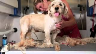 Чудесное преображение бездомной собаки Чарли