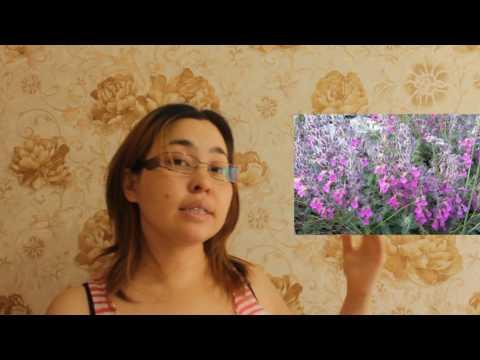 Гомеопатия потенция 6