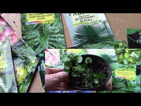 Комнатные растения из семян. Стоит ли покупать семена ? Результат посадки семян .