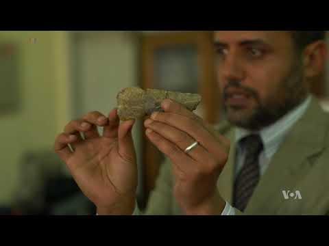 New Dinosaur Species Discovered in Egyptian Desert