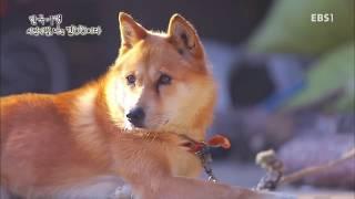 한국기행 - 시선기행, 나는 견(犬)이다 5부 견생역전, 달려라 동경이_#001