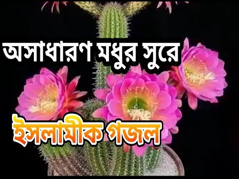 Allah Tumi Doyar Sagor | Asma Akter | Islamic Song | Bangla Gojol Mp3