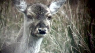How To Head Shoot Deer Out Hunting - Age Restricted - Contains Graphic Images