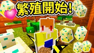 【Minecraft】茶杯生存Ep194 繁殖開始🐢海龜蛋蛋屋🐢🐢【當個創世神】