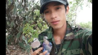 Bẫy cu gáy mồi đất Ninh Thuận clip 28 . Bổi thổ...HỒ LANH RA