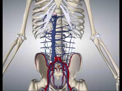 Soluções hipertónicas no tratamento de feridas