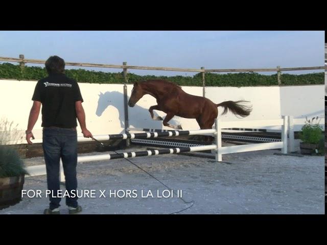 Floris R Z JUMPING
