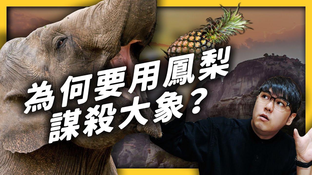 深度解析「印度大象謀殺案」!用水果炸彈傷害大象的人到底在想什麼?|志祺七七