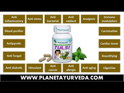Video Tulsi (Holy Basil) Medicinal Properties & Health Benefits