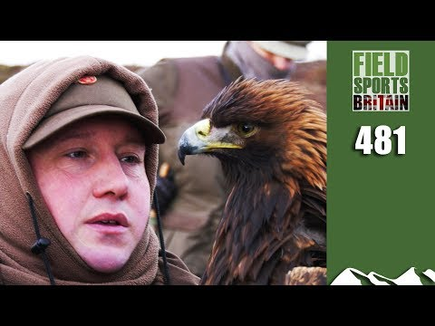 Fieldsports Britain – Eagles on Hares